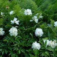 Białe kwiaty w ZOO