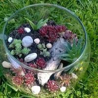 Mini ogródek