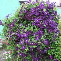 U sąsiadki  rosną kwiatki:)