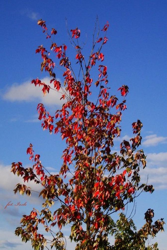 Idzie jesień
