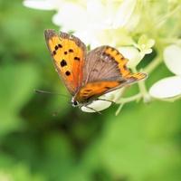 Dzisiaj odwiedził mnie motylek