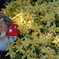 Jerzyk nadal pilnuje kwiatków