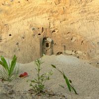 Oaza na piaskowni