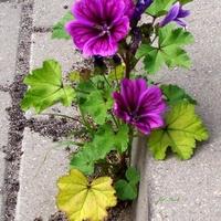 Rosą kwiaty na betonie