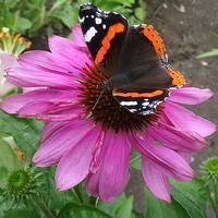 Słoneczka i motylków na cały tydzień:)