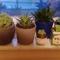 Uwielbiam Kaktusiory