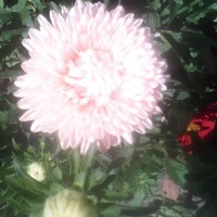 Aster ;) ;) ;)