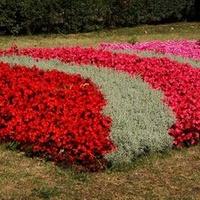 Dywanik kwiatowy, czy kołderka