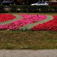 Dywanik kwiatowy w centrum mojego miasta