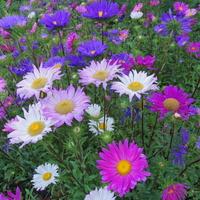 Kolorowej niedzieli kochani :)