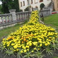 Kwiaty  przy zamku albo palacu  w Kamieniu Slaskim