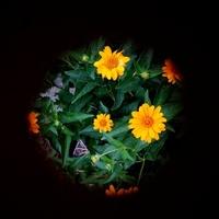 Kwiaty na planecie Ziemia
