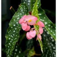Oryginalny kwiat