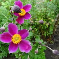 Pozdrawiam kwiatomaniaków :)