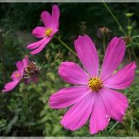 Radosne kwiatki...