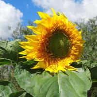 Słonecznego nastroju :)