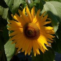Słonecznej środy