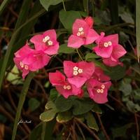 Kwiatki z gwiazdkami