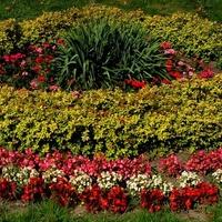 Klomb w ogrodzie botanicznym