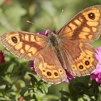 Marcinki Z Motylkiem