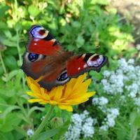 Motylki dzisiaj królują :)