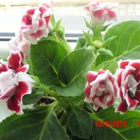 nie znam nazwy tej roślinki :(