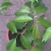zielone listki...