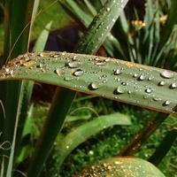 Jest, jest deszczyk :)