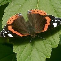 Motylek w słoneczku.