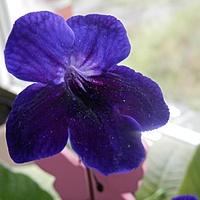 Niebieski kwiatuszek.