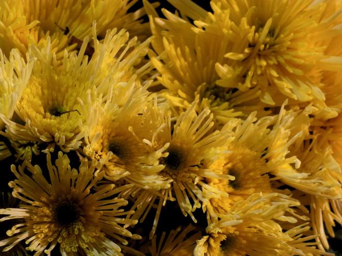 Kwitną w bukiecie