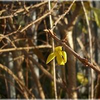Ciut wiosny...jesienią...