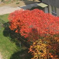 Osiedlowe barwy jesieni