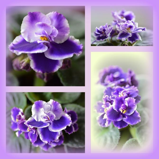 Kwitną pełną parą :)))
