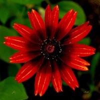 Rozżarzony kwiat