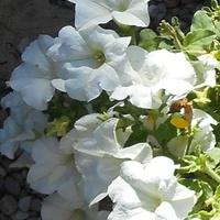 Słoneczna biel