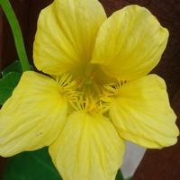 Żółty kwiat i zagadka