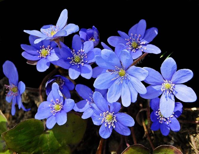 wiosenne błękity ......