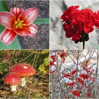 cztery czerwone pory roku