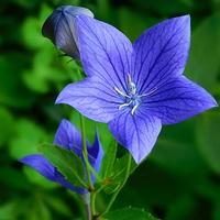 rozwarty kwiat ......