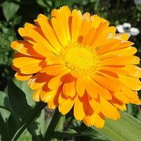 Słoneczka Wam życzę :)