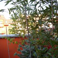 Bambusowy raj
