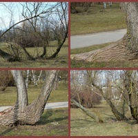 Dziwne drzewa w parku