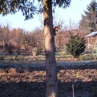 Wiewiórka,która nie przespała zimy.