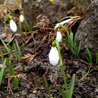 Wiosna :) ..