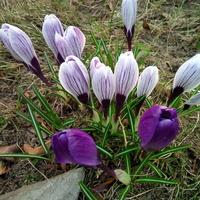 wiosno witaj