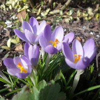 Zaczynamy Wiosnę