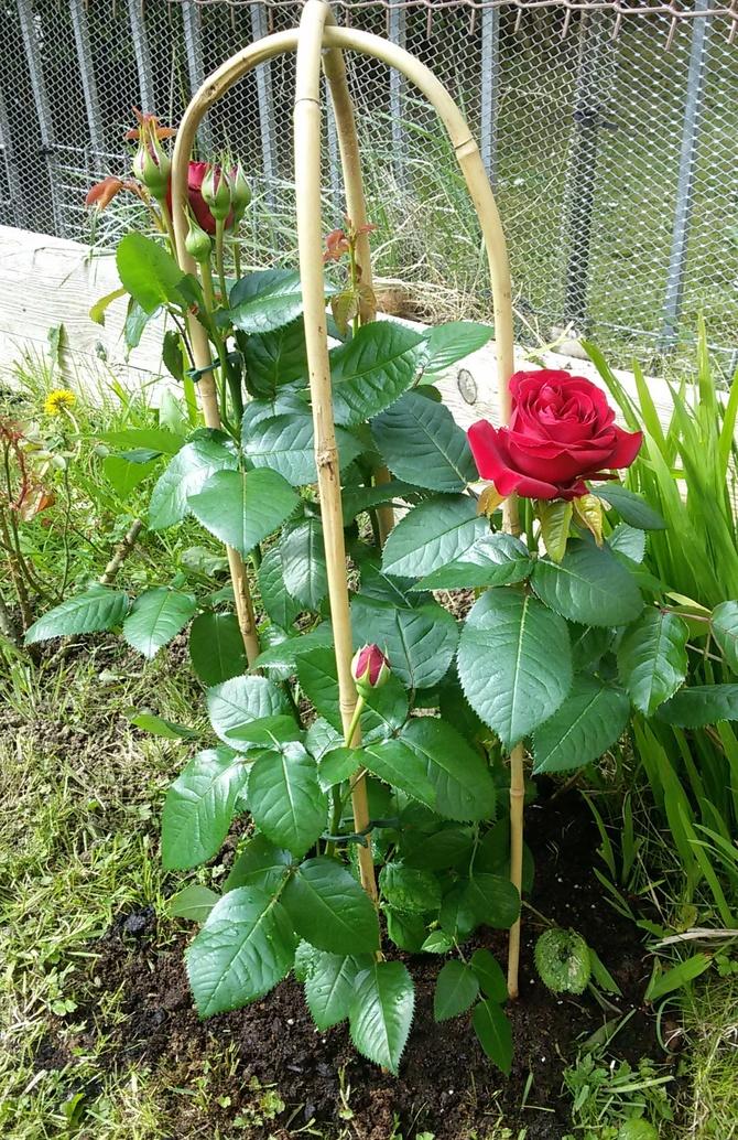 nowości w ogródku