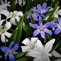 Bialo niebiesko