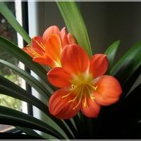 Drugie kwitnienie...